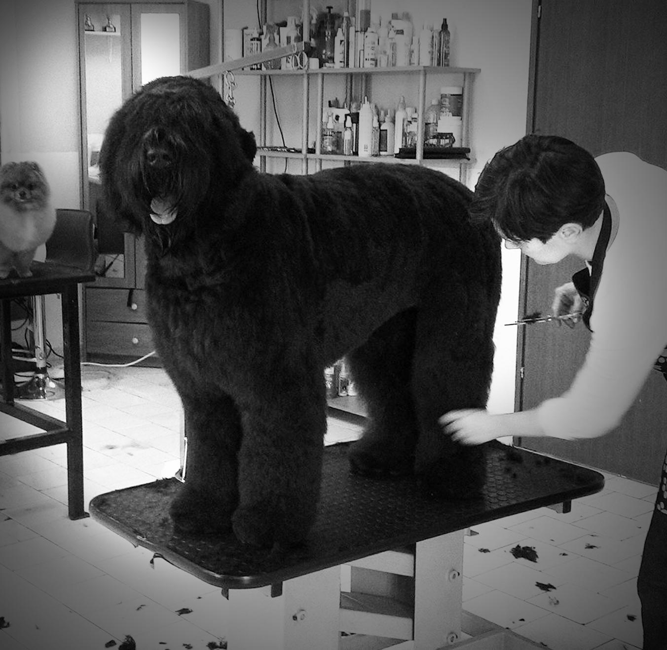 grooming3