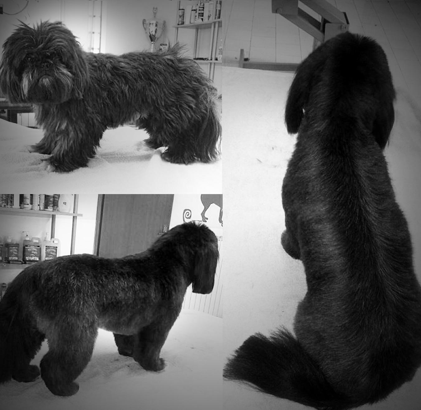 grooming4