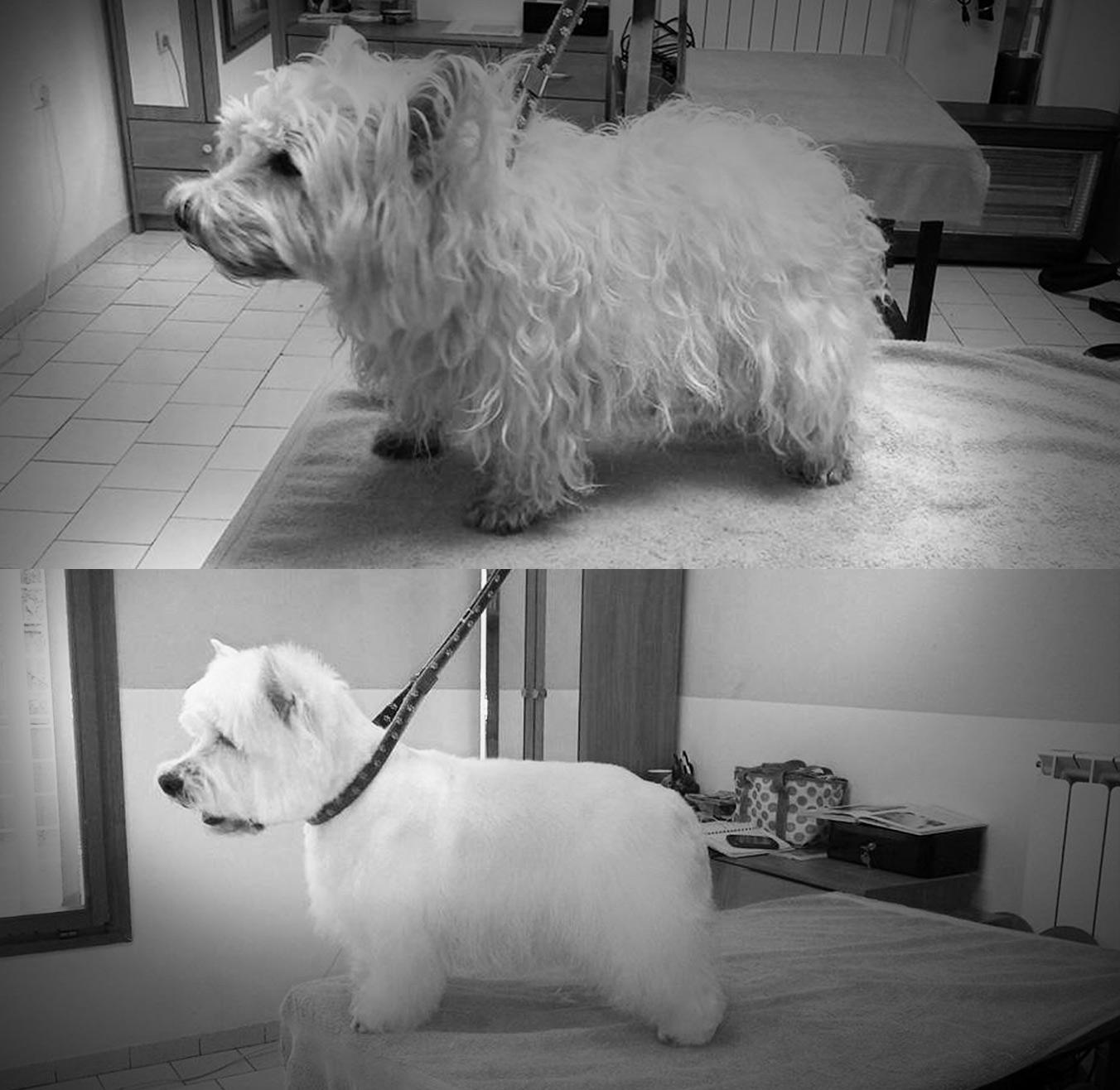 grooming5